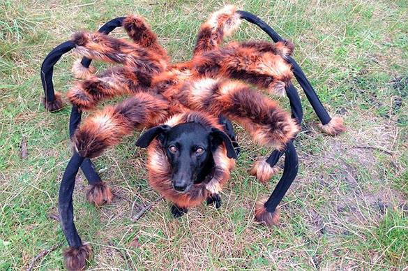 изображение паука:
