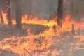 Россия: миллион гектаров сгоревшего леса