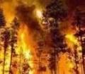 Волгоград: крупный лесной пожар угрожает населенным пунктам