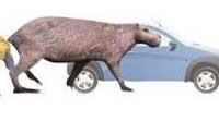 В  Уругвае найдены  кости грызуна размером с бегемота