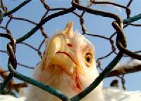 Маршруты птичьего гриппа