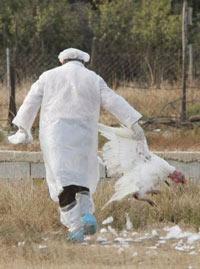 Молдавия запретила импорт птицы из России и Венгрии