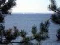 Заповедные леса Финского залива заменит нефтяной терминал?