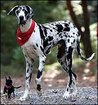 Разительные отличия между породами собак длительное время