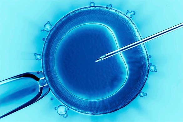 Японские ученые превратили кожу мышей в яйцеклетки