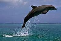 Выступления перед туристами доводят дельфинов до самоубийства