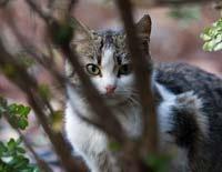 Застрявшую на дереве кошку сбили струей воды