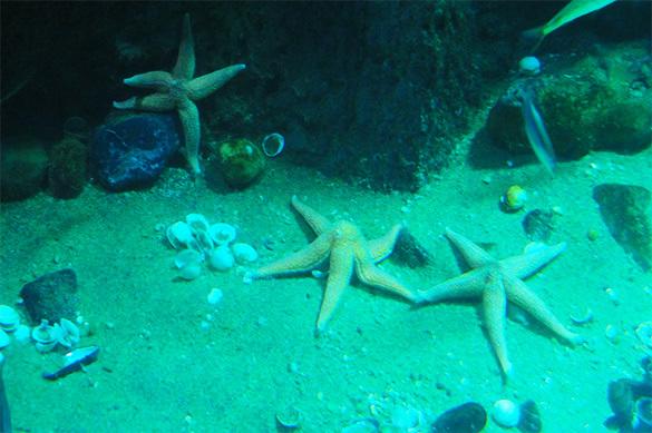 В Чукотском море нашли
