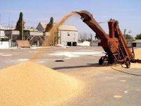 Интервенции не удержат цены на зерно?