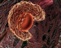 Макрофаг, поглощает старую клетку