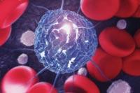 Стволовая клетка в окружении клеток крови