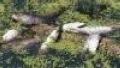 Владивосток: канализационные стоки вызвали гибель рыбы