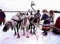 Жизнь полярной тундры: чем красны ненецкие деревни