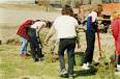 В Калининграде вместо вырубленных деревьев посадят новые