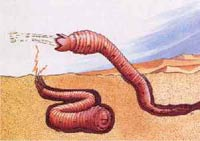 Животное перемещается в толще песка и когда хочет убить кого-то