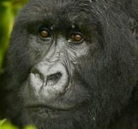 Идеальный паразит занялся геноцидом в джунглях