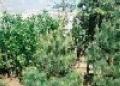 Курск: аграрии уничтожают деревья ядами