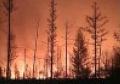 Под Петербургом тушат лесные пожары