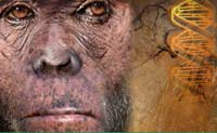 Найден турникет, отделивший человека от обезьяны
