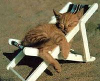 Для полной релаксации надо стать кошкой