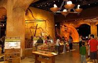 В чикагском музее Леонардо. Фото с сайта авторов