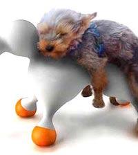 Безответные куклы услаждают похотливых кобелей (ФОТО)
