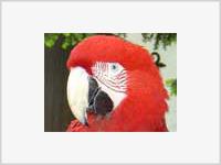 Злобный попугай помог раскрыть ограбление