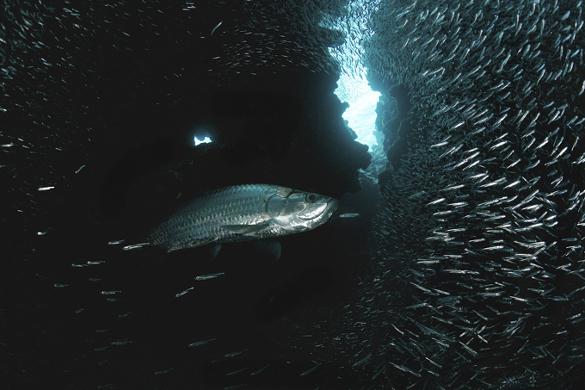 Подводный мир: Не пора ли копнуть глубже?