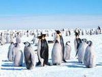 На Северном полюсе откроют передвижной музей памяти полярников