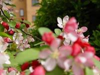 Весна в этом году ранняя