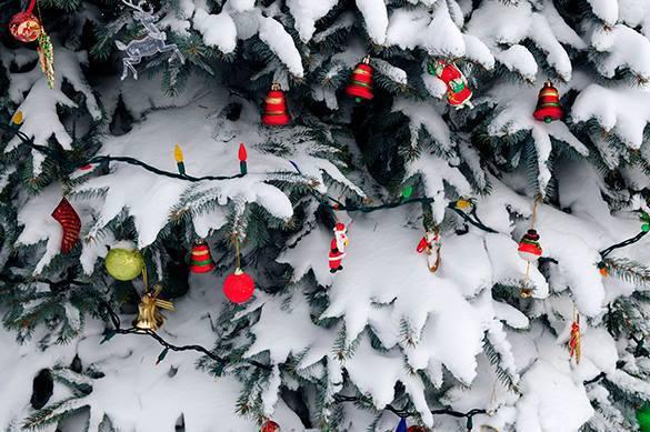 Рождественскую елку в Риге занесли в Книгу рекордов Гиннесса