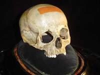 Игры с черепом Моцарта