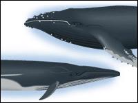 Морские браконьеры пошли в науку?