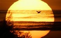 Солнечное затмение проделает путь от Бразилии до Иркутска