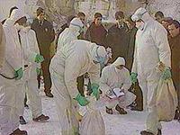 В Китае снова подтверждены массовые случаи «птичьего гриппа»