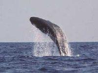 В честь Всемирного дня морских млекопитающих на Камчатке будет
