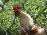 Птичий грипп напомнил о своей опасности для человека