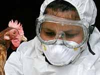 Вакцина от птичьего гриппа вроде есть, а вроде ее и нет