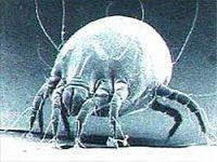 Приморье «атаковал» энцефалит