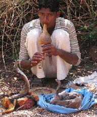 В Индии больше не будет заклинателей змей