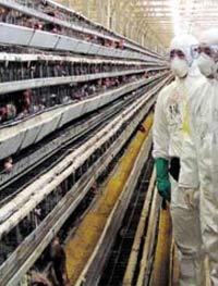 В Московской области зарегистрирован девятый случай гибели птиц
