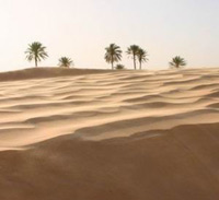 Пустыни нуждаются в эффективном менеджменте