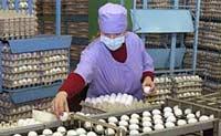 Вакцина от птичьего гриппа проходит испытания