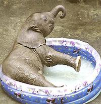 Надувное озерцо: как выбрать детский бассейн