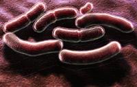 Микробы устроят новый мор по законам экономики