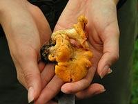 Аномалия: в лесу опять появились грибы