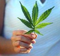 У двух жителей Екатеринбурга нашли более 60 кг марихуаны