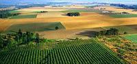 Госдума приняла закон о господдержке сельского хозяйства