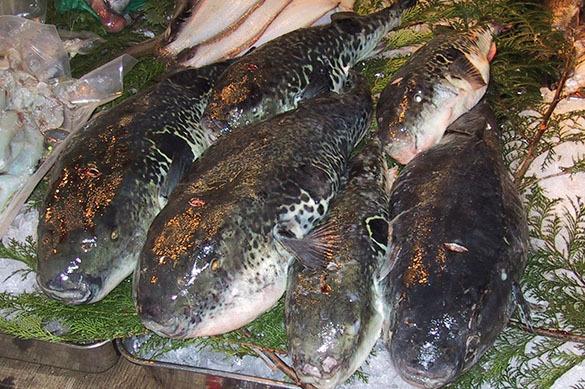 В Севастопольской бухте появились самые ядовитые рыбы Тихого океана