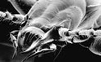 Гитлер и Буш вдохновили энтомологов
